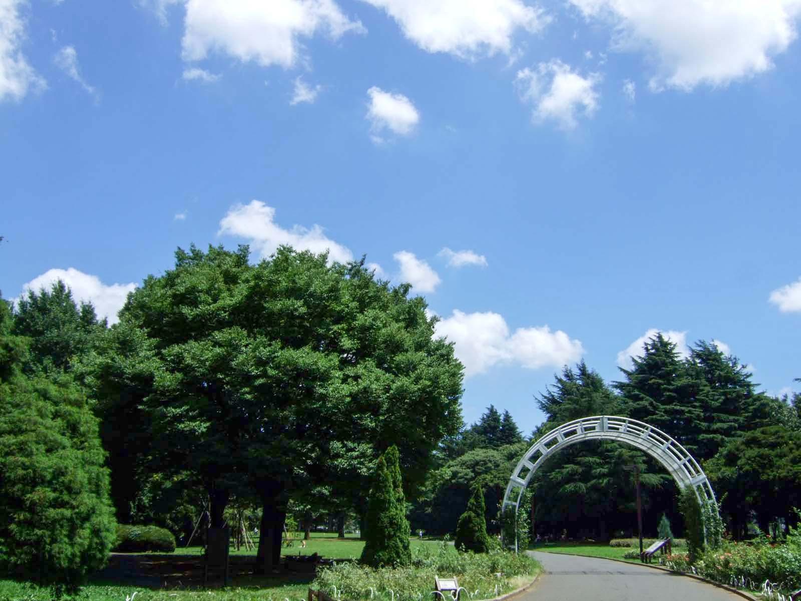 森林,盛夏,真夏,代々木公園,空,雲,アーチゲート〈著作権フリー無料画像〉Free Stock Photos