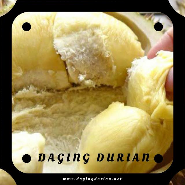 tersedia-daging-durian-medan-bermutu-di-bolaang-mongondow