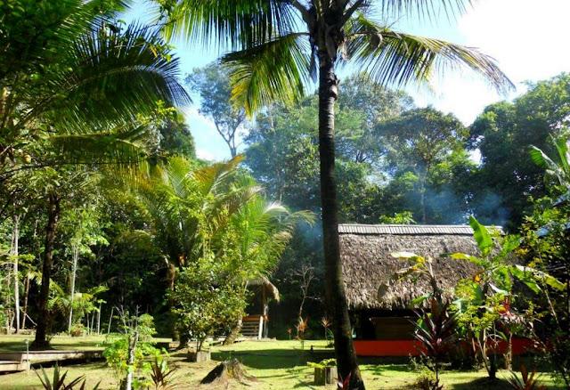 amazonewoud, woudkamp, frans-guyana, amazonewoud frans-guyana, toerisme amazonewoud