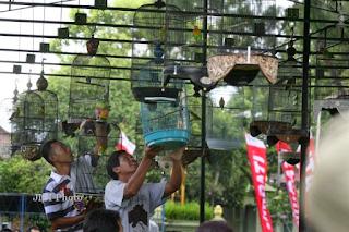Teknik Rahasia Perawatan Lovebird Juara Piala Raja