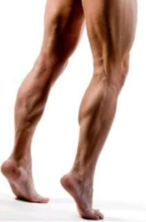 membentuk otot paha kaki