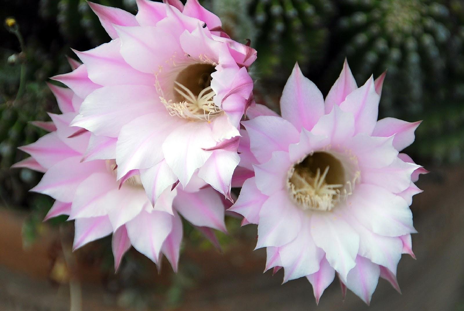 Fotos de flores cactus con flores - Fotos jarrones con flores ...