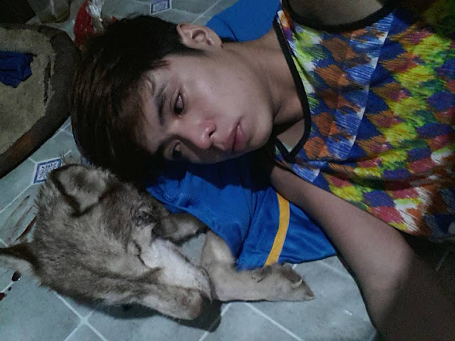 HEARTBREAKING: Brei The Cured Zombie Husky Already Passed Away