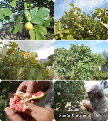 Frutas do Silveirão