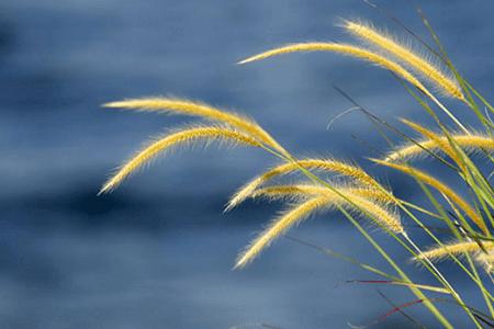 Puisi tentang hati yang sunyi dalam cinta