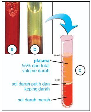 (a) Darah sebelum disentrifugasi, (b) darah setelah sentrifugasi. (c) Komponen penyusun darah terpisah setelah disentrifugasi.