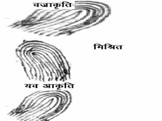 shankh on finger in palmistry, hastrekha