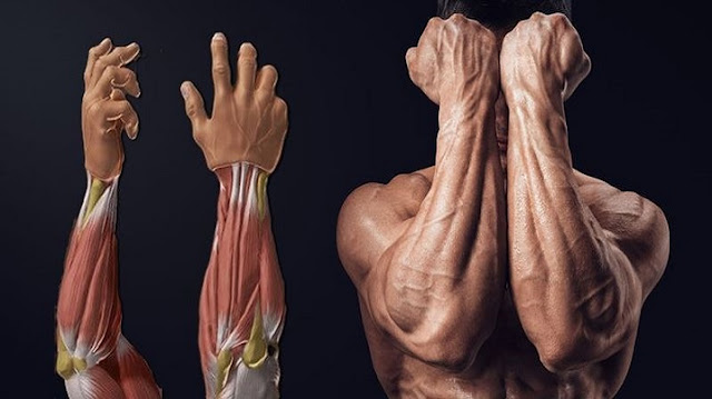 Best Tricks For Building Massive Forearms