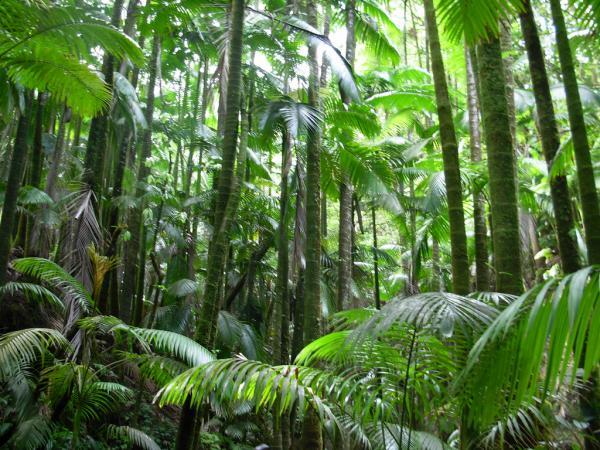 نباتات تعيش في الغابة بالصور