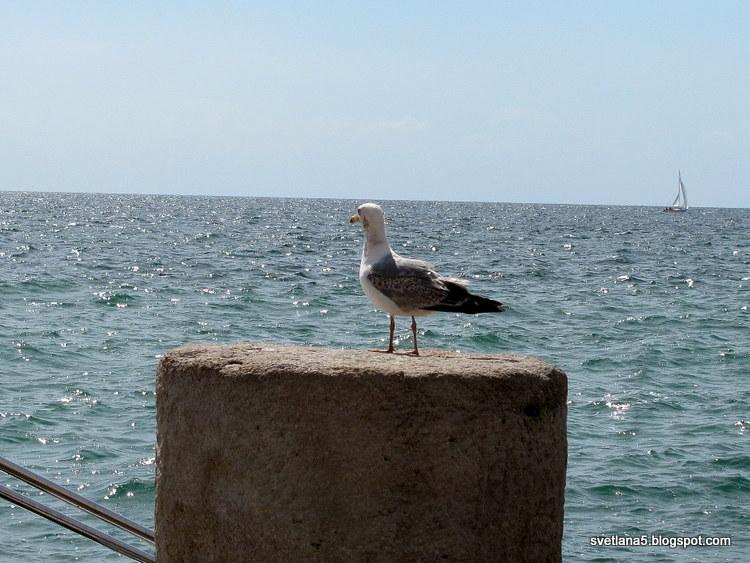 galeb, morje