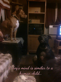 A dog's mind is similar to a human child...There are aspect of life that can only be seen through observation.