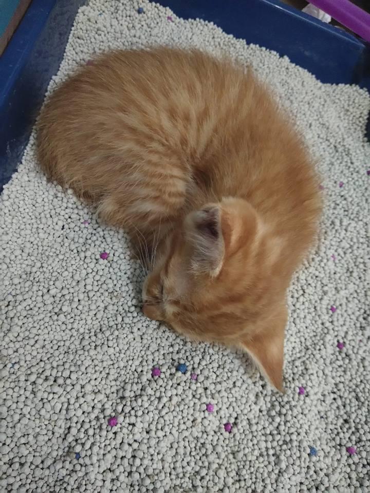 kitten tidur di litter box