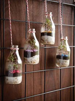 Terarium Botol Gantung