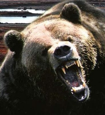 Angry Black Bear | Funny Collection World