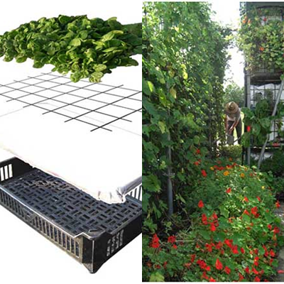 Horta com sistema modular - Sorriso na Web