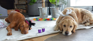 Hunde-Geburtstag