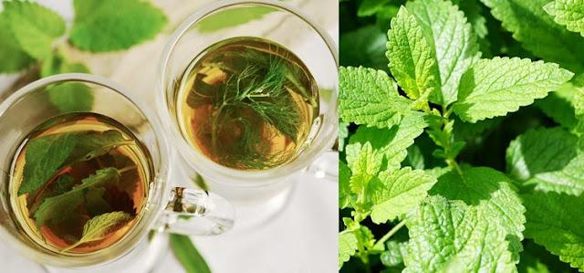 20 Benefits Of Mint
