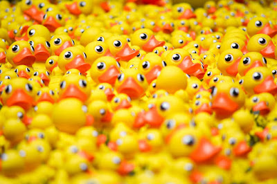 Yellow rubber ducks