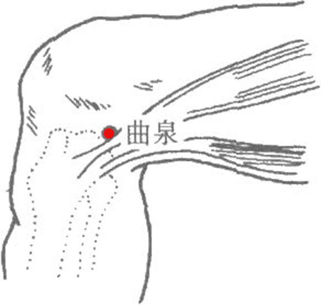 緩解下肢不適的八個特效穴位(消腫、抽筋)