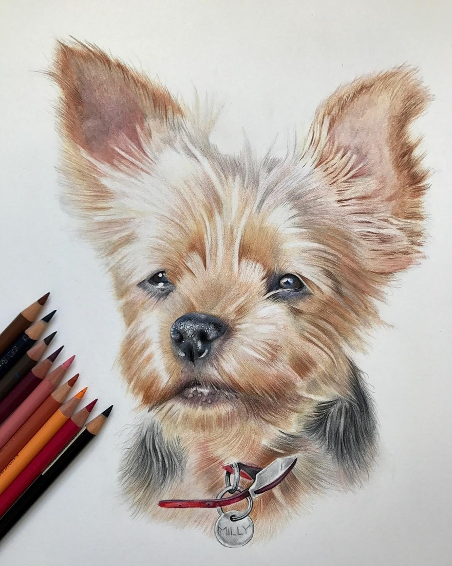 13-Dog-Paul-Miller-Wildlife-and-Domestic-Animal-Drawings-www-designstack-co