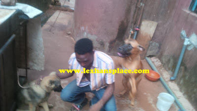 lexhansplace n dogs 3