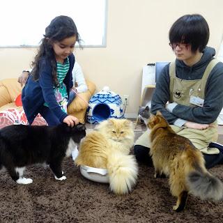 Petting Cats at Nekorobi Cat Cafe Tokyo