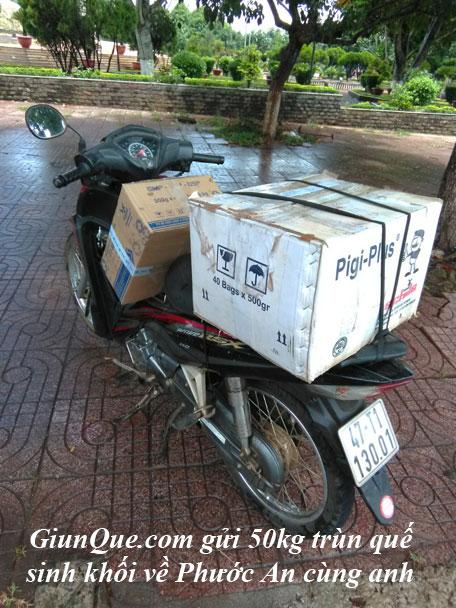 Trùn quế thị trấn Phước An