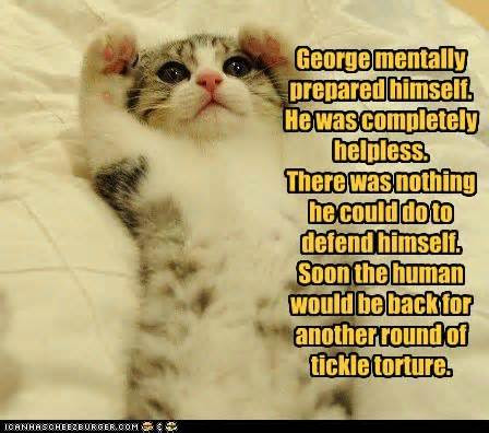 cat+tickle speak of the devil a night in the life of a cat