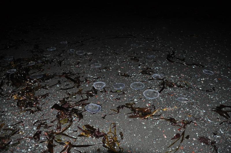 медузы и ламинарии тихий океан мыс камчатский камчатка