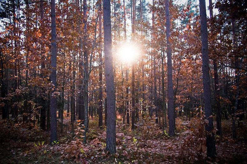 Bialowieza: El último bosque virgen de Europa | Polonia, Bielorrusia