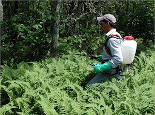 contoh spesies invasif di indonesia, invasif artinya, tindakan invasif adalah, penjelasan invasif, prosedur invasif adalah, tanaman invasif, tanaman invasif di indonesia, tanaman invasif pdf, jenis tanaman invasif, dampak tanaman invasif, pengendalian tanaman invasif, makalah tanaman invasif, jurnal tanaman invasif, tanaman invasif adalah, tumbuhan asing invasif, contoh tanaman invasif, tumbuhan invasif di indonesia, tumbuhan invasif pdf, pengertian tanaman invasif, makalah tumbuhan invasif, jurnal tumbuhan invasif, contoh tumbuhan invasif