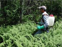 Pemulihan Ekosistem yang Dipengaruhi Tanaman Invasif