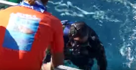 Tubarão-branco invade jaula - e tinha um mergulhador preso lá dentro -  Img 3