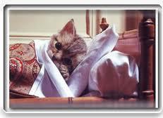enfermedades,gatos,prevención,vacunas,salud,cuidados