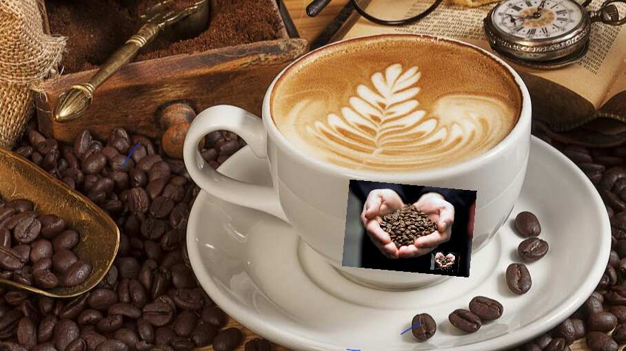7 Steps for World Class Gourmet Coffee, Gourmet Coffee,best coffee