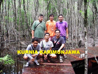 peserta jalan di tracking mangrove