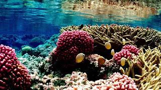 pacific remote islands, pacific ocean