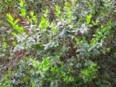 تعرف على أنواع الاشجار بالتفصيل بالصور والفديو