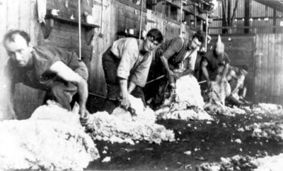 Shearers shearing sheep in the Barenya Station wool shed in 1916, Queensland