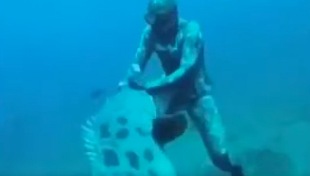 The giant fish that attacked the spearfishing diver.