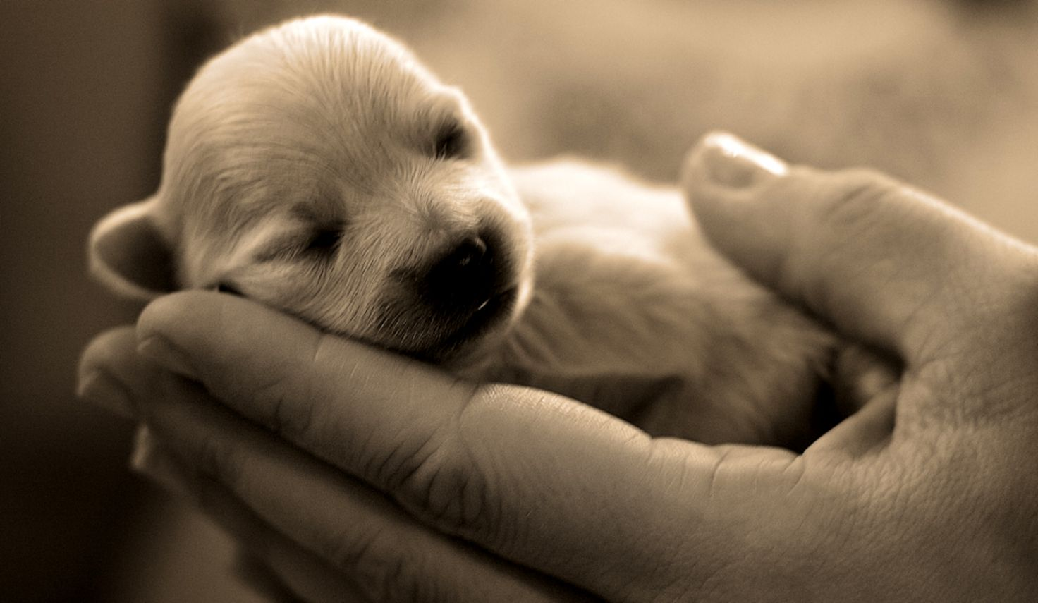 Cute puppy pictures wallpaper free download