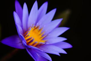 Flor azul abierta