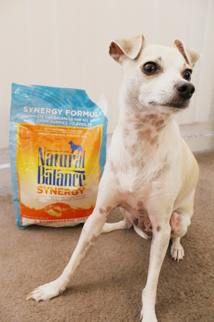 Natural Balance Synergy Dog Food Review