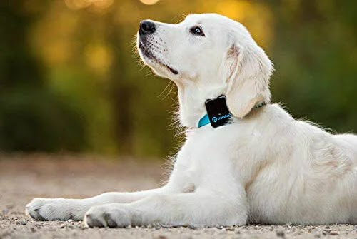 best pet gps tracking system