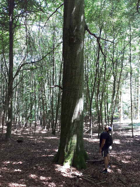 trees of Nationalpark Eifel