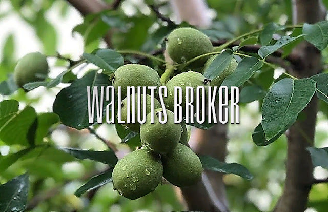Чандлер или Кочерженко от Walnuts Broker