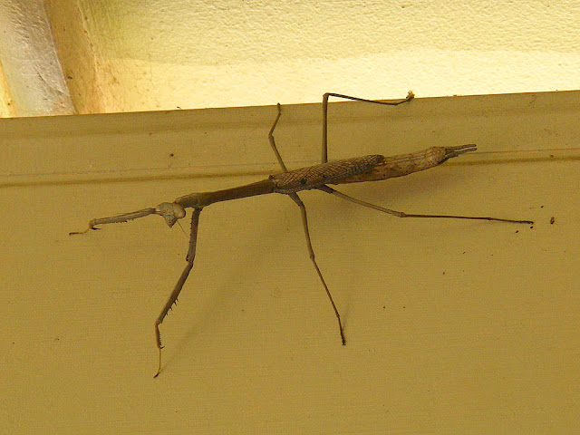 Monster Mantis. Photographed by Susan from Loire Valley Time Travel. https://tourtheloire.com