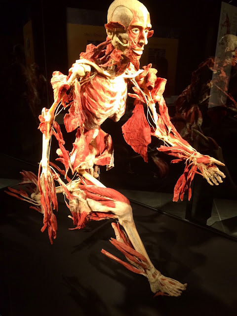 Wystawa Body Worlds & The Cycle of Life