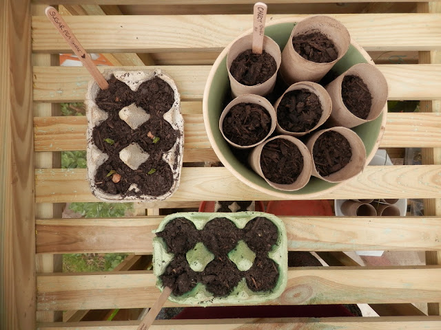 13 plastic free ways to start seeds.  Start your garden seeds off without using plastic.  secondhandsusie.blogspot.com #gardening #plasticfree #seedstarting #gardenblogger #plasticfreegardening