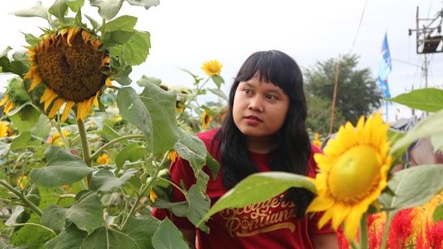 Rajati Sun Flower, Wisata Kekinian di Kubu Raya